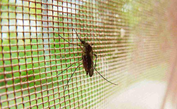 komarnici